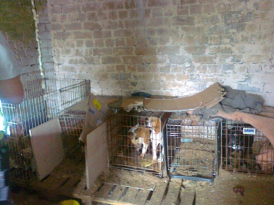 """Taip daugintojas Lietuvoje kankino veisiamus šunis. Kol bus paklausa pigiems """"veisliniams"""", tol šunys bus kankinami."""