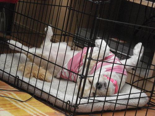 puppy_crate